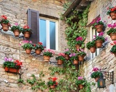 Italian Scene, Flowers on Stone Wall in Assisi Italy, Photograph