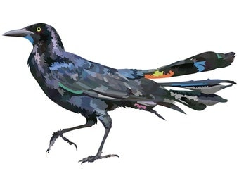 Grackle. Cross Stitch pattern, Digital Download PDF. Design of an American Grackle with colorful pops in the feathers.
