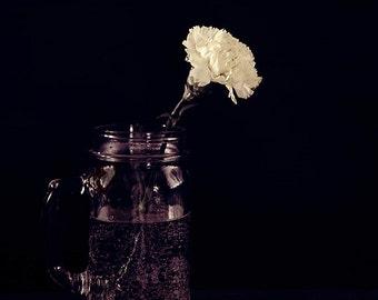 "Carnation Photograph - Flower Photograph - Still Life - Spring Art - Floral Art - Home Decor - Wall Art - Gift for Gardener - ""Charm"""