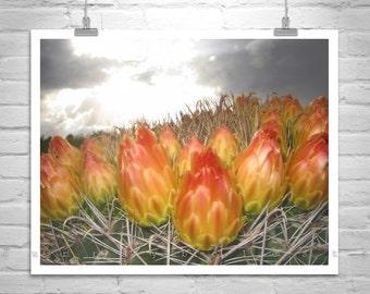 Cactus Art, Sonoran Desert Photography, Desert Wildflowers, Arizona Art, Monsoon, Thunderstorms, Cacti, Orange, Red, Tucson, Pima County