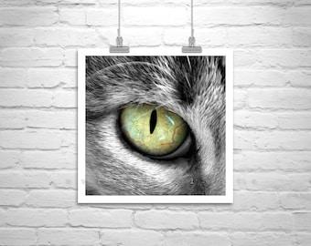 Cat Photograph, Cat Eye, Cat Picture, Cat Art, Animals, Cat Print, Chat, Cute Animals, Square Print, Square Art