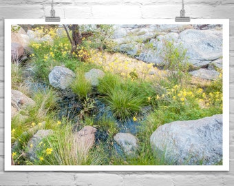 Garden Art, Flower Art, Spring Flowers, Floral Art, Nature Photography, Columbine Flower, Nature Art, Canyon Art, Arizona Art, Spring Art