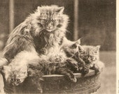 vintage Cats postcard - On guard Postcard  Sandor's Cat Studies, Tuck and Sons divided, 866
