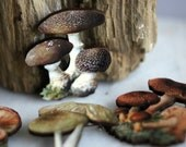 Fungus Brooch, Mushroom Pin, Toadstool, Woodland