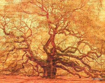 Angel Oak Tree on Wood - Giclee' Print on Watercolor Paper