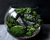 Bio-Bowl Forest World Terrarium with Live Woodland Plants - 3 Sizes