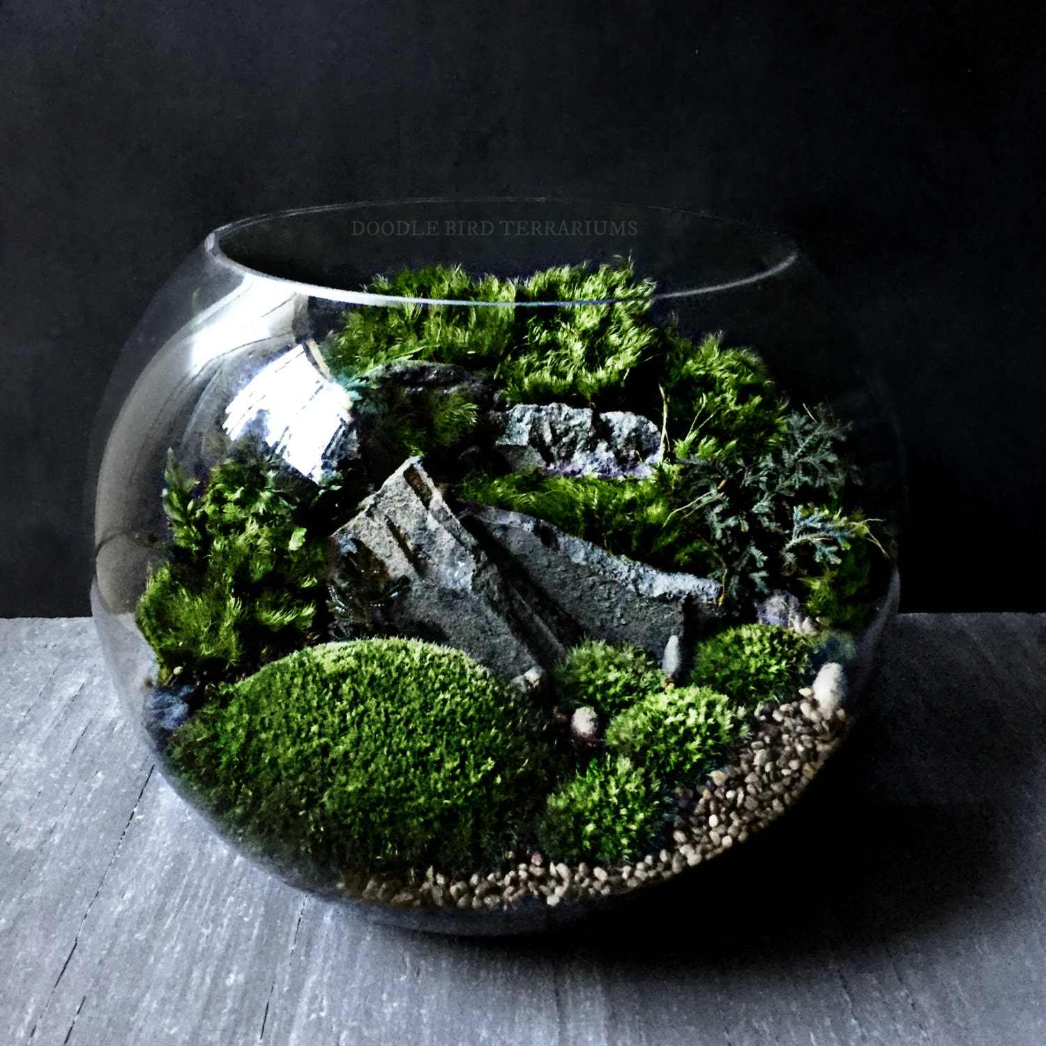 bio bowl terrarium with organic woodland plants alternative. Black Bedroom Furniture Sets. Home Design Ideas