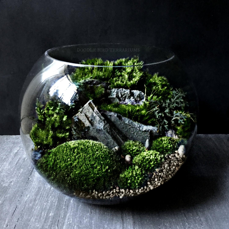 bio bowl terrarium with organic woodland plants alternative. Black Bedroom Furniture Sets. Home Design Ideas
