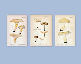 1912 Antique Mushroom Prints - Set of 3 Prints - Set No. 6