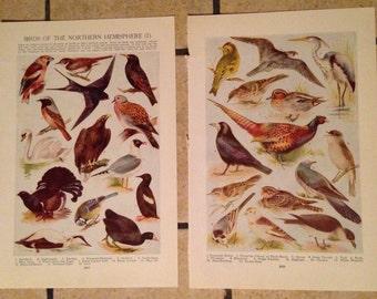 1947 Birds of the Northern Hemisphere Vintage Illustrations