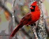 Cardinal ACEO Art, Red Black Gray, Digital Artwork, Woodland Wildlife, Backyard Bird, Trading Card, Collectible Small Giclee Print