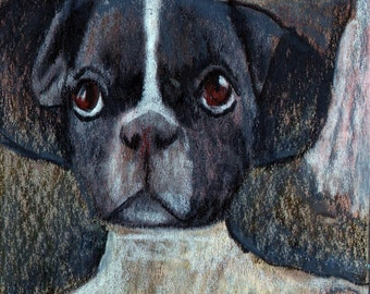 original art drawing aceo card boston terrier anthropomorphic animal in clothes portrait