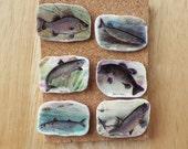 Vintage Image Fish Themed Tacks / Thumbtacks / Push Pins, Gift for Him, Gift Under 20, Fishing, Fisherman