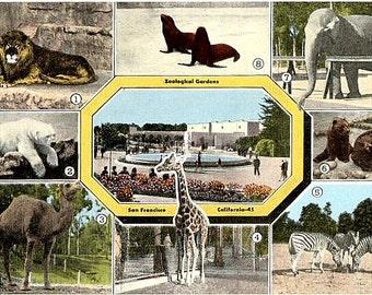 Vintage California Postcard - Animals at the San Francisco Zoo (Unused)