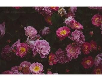 Pink Roses Print - Nature Photography Botanical Print Rose Garden Dreamy Photography Flower Photography