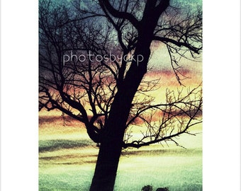 5 x 7 Kentucky Tree photo print