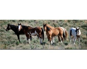 Cavalier's Pride Wild Mustang Fine Art Photograph - Wild Horses Photos - Wild Mustangs - Oregon Wild Horses
