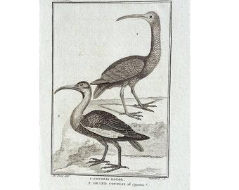 1775 ANTIQUE BIRD ENGRAVING - buffon bird rare original antique print ornithology engraving - wading sandpiper