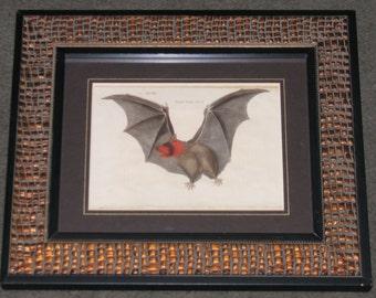 1790 VAMPIRE BAT FRAMED antique engraving original antique hand colored print ready to hang for halloween decor