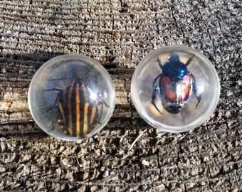 Set of 2 Real Beetle Spheres