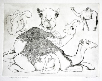 copperplate etching titled of camels and camelpose title 'Camelpose or Ustrasana'