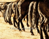 Equine art, herd of horses, large pohtograph, horse art, southwestern decor, western decor, cowboy gift, brown tones, 24 x 16, horses tied