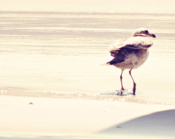 Bird Photography - Beach Photo - Beach Photography - Square Photo - Wall Print - Seagull Photography - Earth Tone Photo - Dorm Photo