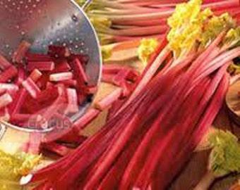 RHUBARB VICTORIA- (1 ) 3 year Gallon sized Hardy Organic Heirloom Fruit Plants