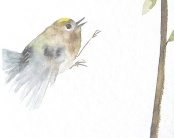Original Bird Watercolor Painting Flying Goldcrest