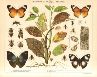 1897 Mimicry of Insects Original Antique Chromolithograph to Frame
