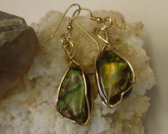 Bright Green to Gold Fire Ammolite from Utah Deposit Gold Filled Wire Wrapped Earrings 449
