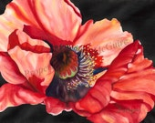 "Notecard ""Red Poppy"" by Sandi McGuire"