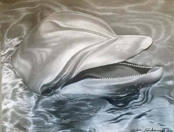 Gallery For gt Swimming Dolphin Drawing