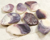 8 natural wampum quahog clam shell pieces purple and white Cape Cod (no.25c)