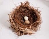 Real Birds Nest with Quail Eggs - Natural Decor