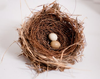 Real Birds Nest with Quail Eggs - Natural Decor