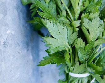 Kitchen Photography, Food Art, Green Kitchen Wall Art, Herbs Print, Farmers Market Art, Parsley