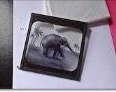 Magic Lantern Slide, Victorian Glass Slides, Victorian Toys, Elephants Revenge, Lantern Slides No. 1