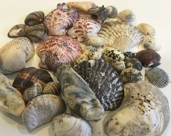 Eclectic Genuine Shell Collection - Gray / Purple / Brown / Black / White / Cream