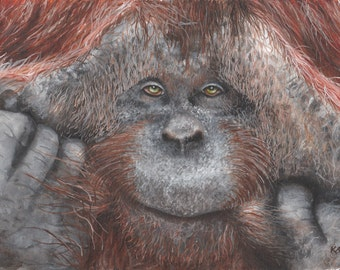 Limited Edition Print of an Orangutan Watercolor Painting