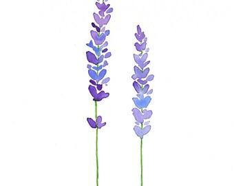 Lavender Watercolor Painting - Botanical Art - Lavender Art