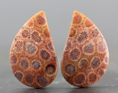 Earring Pair, Natural Gemstone Fossilized Coral Agatized Fossil Cabochon Pendant Necklace Bracelet Petoskey Stone Designs Healing (CA4908)