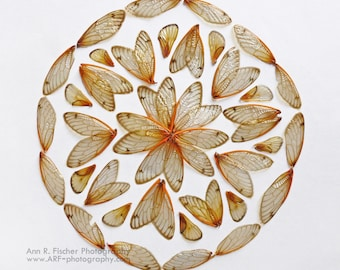 Cicada Mandala, Insect Wing Pattern, Circle Design Photo