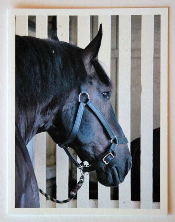 Black Draft Horse, note card, blank greeting card, horse art,  horse photos, equestrian photos, fine art, single card, photo greeting cards,