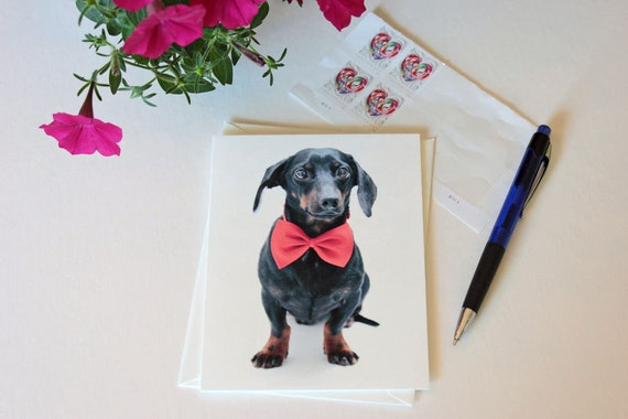Dachshund, blank greeting card, note card, formal, red, black, bow tie, dog art, dog photo, single card, photo greeting card, pizzazz,