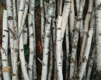 how to clean white birch bark