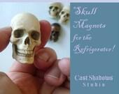 Skull Magnet, realistic human half skull, Refrigerator magnet, Cast Shadows Studio, by Richard Chalifour