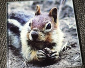 Glass Tile or Coaster - Golden-Mantled Ground Squirrel - 4.25in x 4.25in
