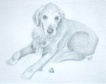 Your Pet In Pencil