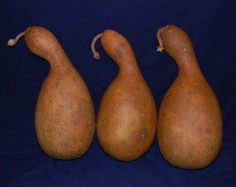 Craft Ready Set of Three Dried Penguin Gourds